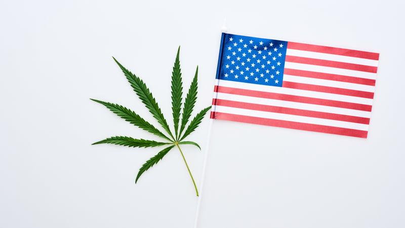 Image of hemp leaf and US flag on white background