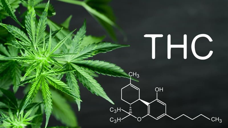 THC Letters with Chemical Structure Beside the Hemp Leaves