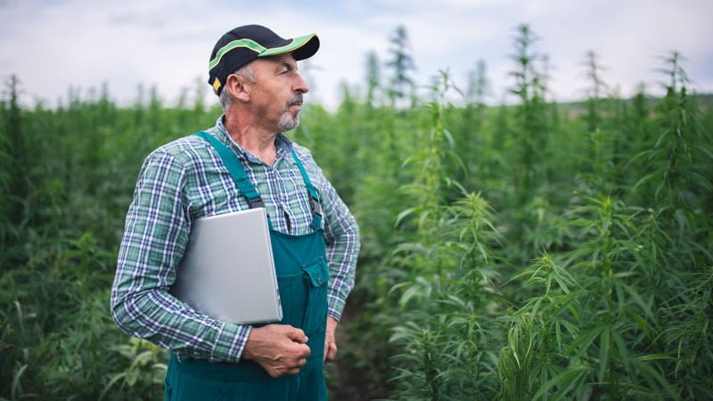 Man Wearing Cap Standing on the Hemp Field with Paper on His Arm