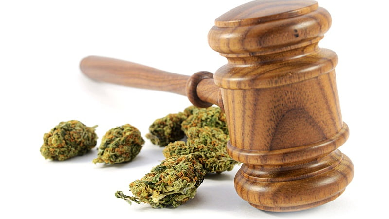 a wooden gavel with some hemp buds over a white background