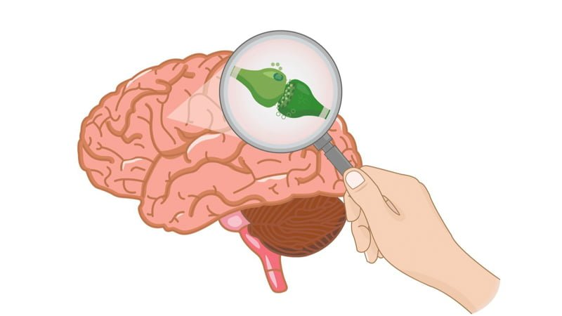 Illustration of Brain and Receptors